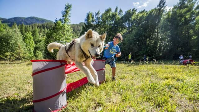 - mushing addict_chiens_enfants_traineau_nature_activite_vigneaux_ete_jannovakphotography-9666.jpg