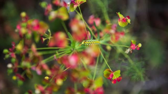 - fleurs_ailefroide_le vallon de Celse-Niere_nature_ete2017_jannovakphotography-4432.jpg