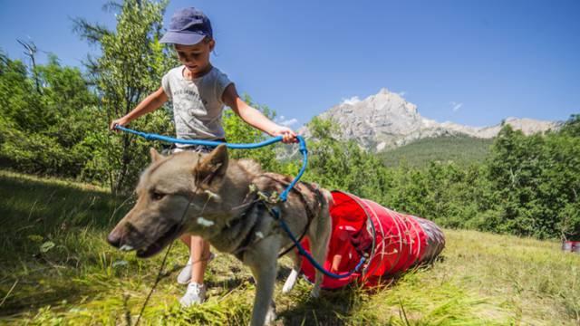 mushing addict_chiens_enfants_traineau_nature_activite_vigneaux_ete