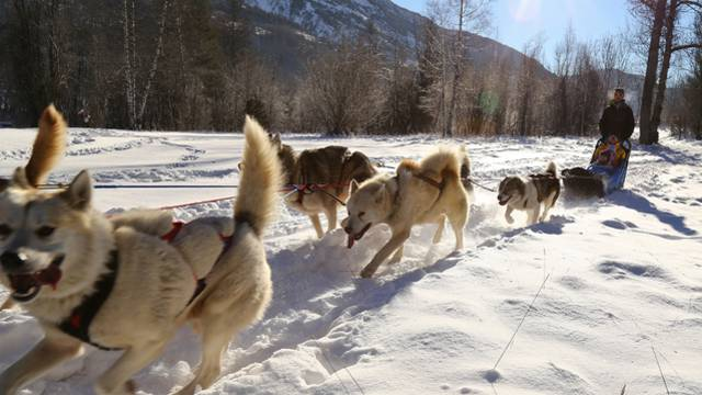 Dog sleighing in Puy Saint Vincent