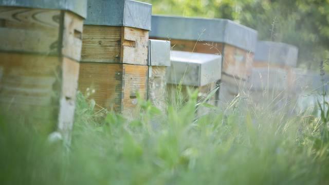 Comment se fabrique le miel? - English