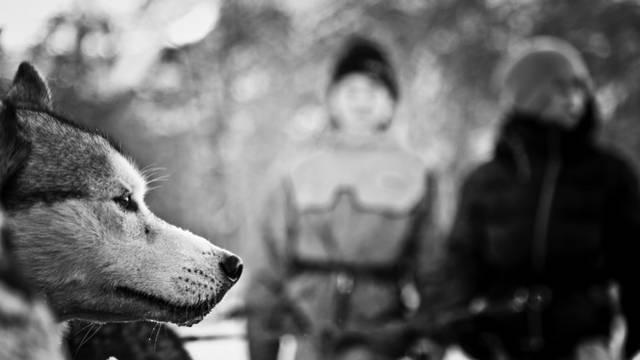 - chiens_de_traineaux_psv_hiver_nuit_animation_jannovakphotography-0623.jpg