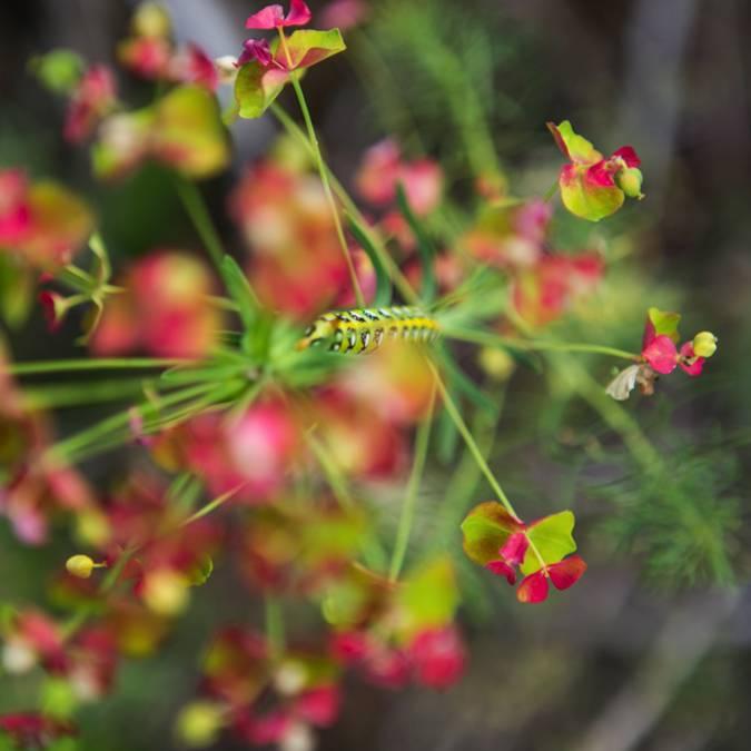 - fleurs_ailefroide_le vallon de Celse-Niere_nature_ete2017_jannovakphotography-4453.jpg