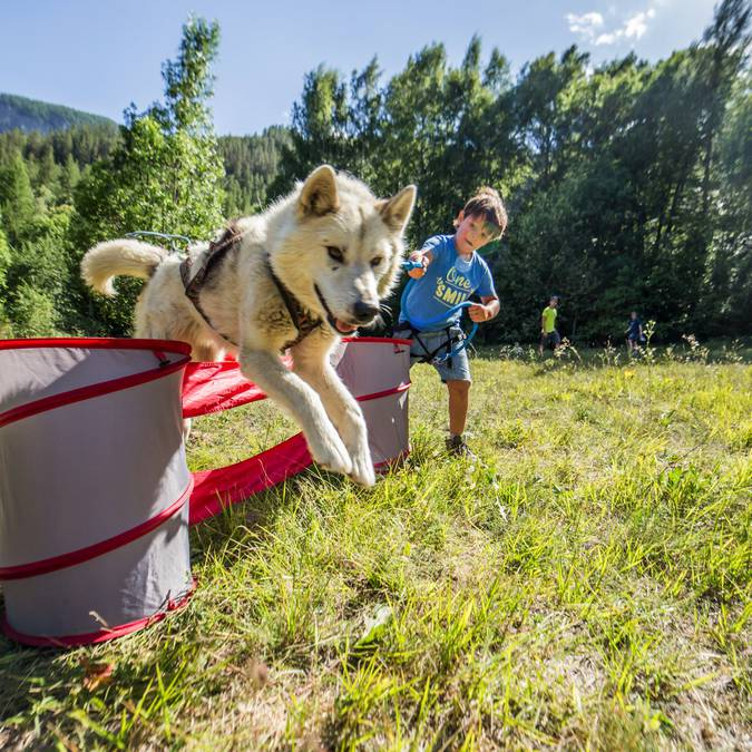 Mushing Addict Chiens Enfants