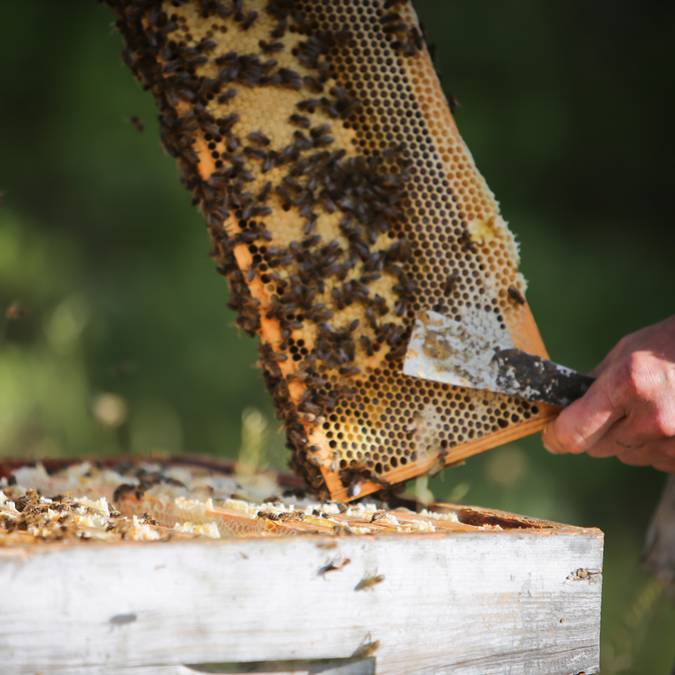 Apiculture traditionnelle Vallouise