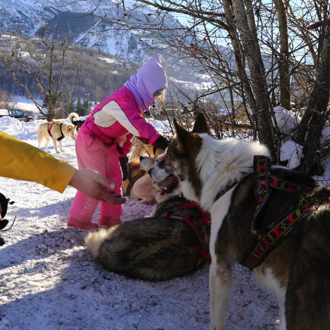 Dog sleigh outing Pays des Ecrins
